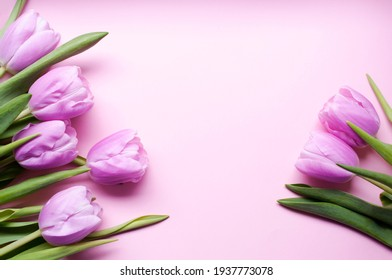 Spring card with lilac tulips on a pink background with copy space for text, top view. Greeting card for woman