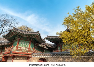 Spring at Changdeokgung Palace, Seoul, South Korea