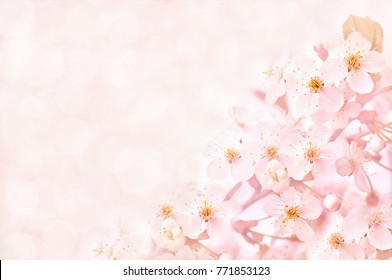 Spring cherry blossom frame, toned, springtime blossoming flower background, pastel and soft floral card