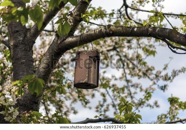 Spring cherry blossom tree and Bird house