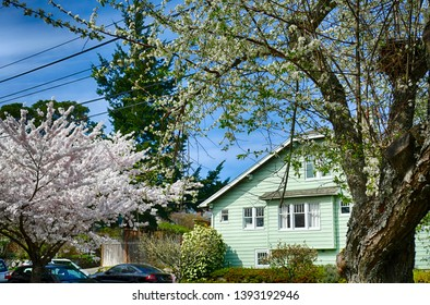 Spring cherry blossoms outside traditional home in Seattle, Washington