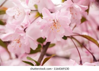 Spring in China