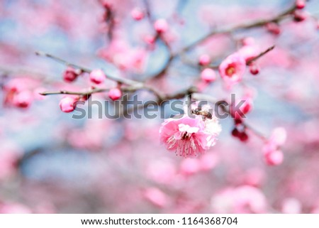 spring china cherry blossoms stock photo edit now 1164368704