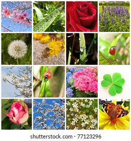 Spring collage showing different spring pictures
