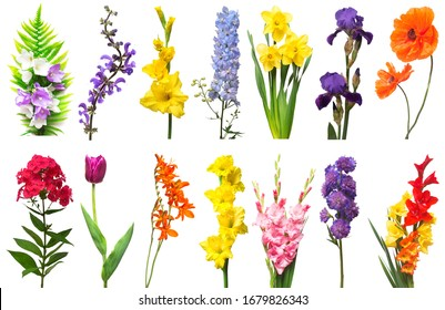 Spring collection of flowers fern, poppy, crocosmia, iris, bell, phlox, tulip, daffodil, gladiolus, delphinium isolated on a white background