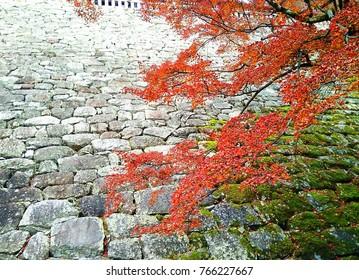Spring color in Japan