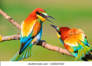 spring colored birds flirting, natural design, unique moments in the wild