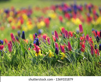 Spring colored flowers in the grass