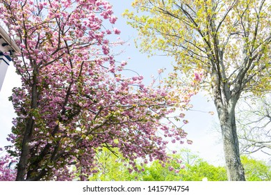 Spring colorful floral background with plants and flowers in bloom