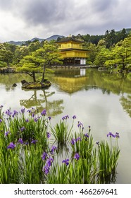Spring and colorful visit of Golden temple, Kyoto, Japan.