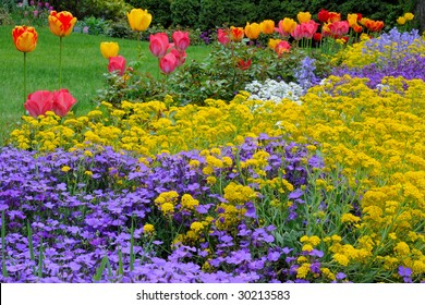 Spring colours - mixed garden bed (Vincas, Alyssum, Tulips)