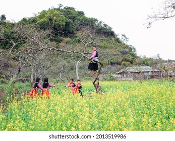Spring comes to Moc Chau, Son La is full of peach and plum trees on stone fences, Hmong children play in flower fields. Photo taken in Moc Chau in May. December 2019