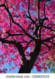 spring is coming alone with colorful blossom.