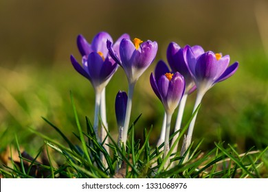 spring is coming, flowers