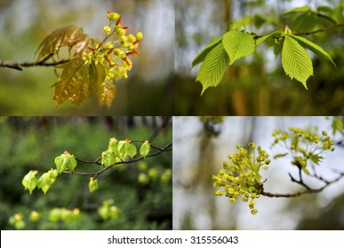 Spring, the compilation of several images of nature - colage