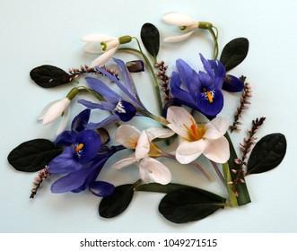Spring Composition: Bunch of flowers in spring, iris, snowdrop, crocus