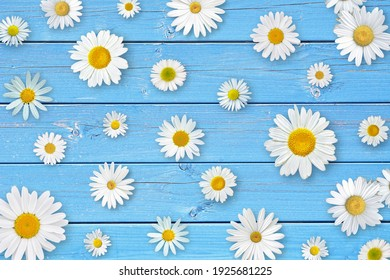 Spring composition. White daisy flowers on blue wooden tabletop background.