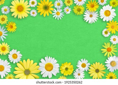 Spring composition. White and yellow daisy flowers on green cardboard background.