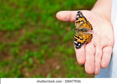 Spring concept with close up of child holding a painted lady butterfly, Vanessa cardui, with copy space