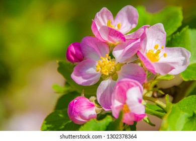 Spring concept greeting card pink sacura flowers