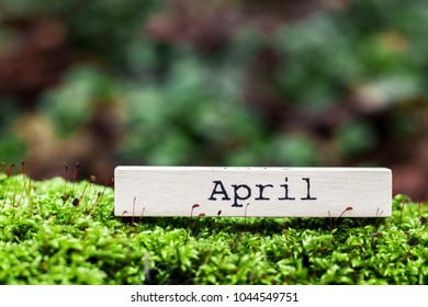 Spring concept. Inscription 'April' on the piece of wood lies on the moss