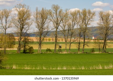 Spring in countryside. Long green fields, endless lines of trees, beautiful blue skies with just several white clouds. Very pleasing atmosphere, peaceful, calm and relaxing.