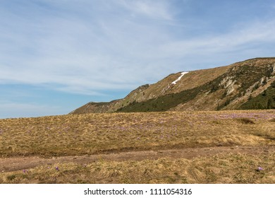Spring and crocus flowers in mountains