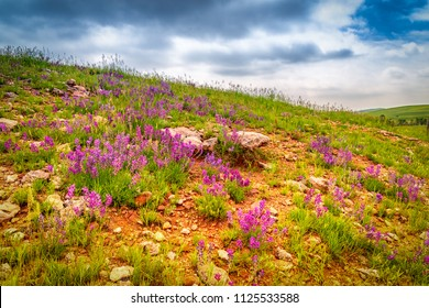 Spring in Custer State Park