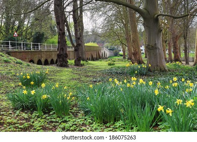 Spring Daffodils by Shillingford bridge on the river Thames in Oxfordshire