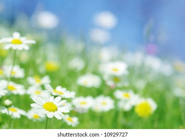 Spring daisy flowers with green grass blue sky. Beautiful outdoor nature flower scene suitable for spring,Easter, holiday designs with space for text