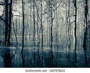 spring dark forest