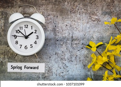 Spring Daylight Saving Time concept with with white clock and yellow forsythia flowers on gray, flat lay, Spring Forward