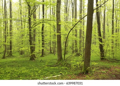 Spring deciduous forest.
