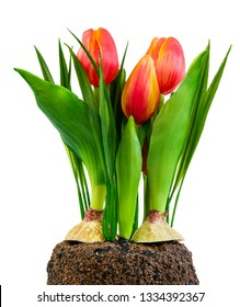 Spring deco with artificial orange tulips isolated on white