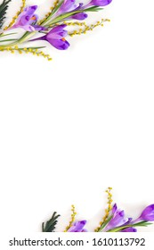 Spring decoration. Frame of violet crocuses, yellow flowers mimosa on a white background with space for text. Top view, flat lay