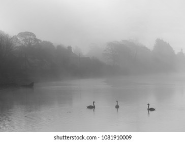 A spring early morning scene capturing the light mist as it rolled over the bay.  Obscuring detail and light leaving a mystical and secretive world.  The swans forever graceful glide through the water