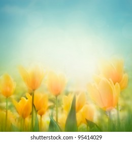 Spring Easter background with beautiful yellow tulips. Summer flower background.