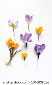 Spring, Easter floral composition. Yellow and violet crocuses flowers on white wooden background. Styled stock photo. Flat lay, top view.