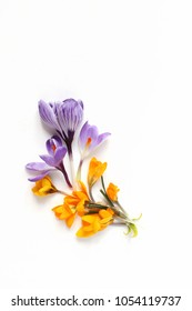 Spring, Easter floral composition. Yellow and violet crocuses flowers on white wooden background. Styled stock photo. Flat lay, top view. Decorative corner.