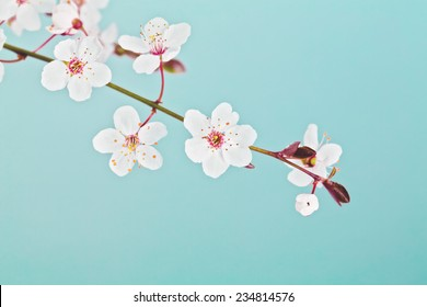 Spring Easter greeting card. Branch of blossom cherry tree over blue sky.