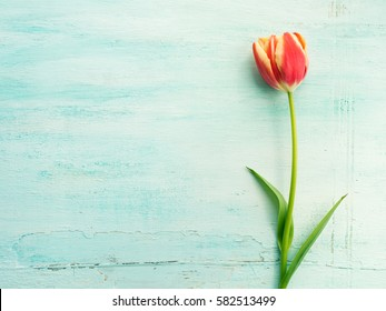 Spring easter tulip floral minimal pastel color background with copy space. Top view