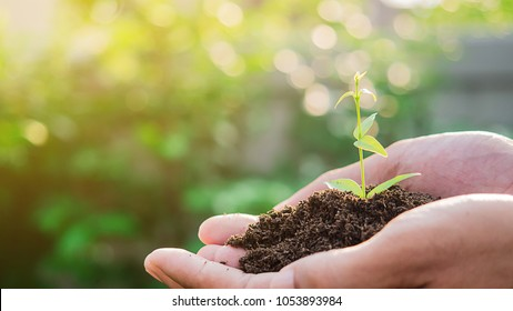 Spring or ecology or sustainable development concept. Human hand holding green small plant new life over blurred abstract nature lights and greenery  background.