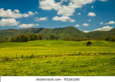 Spring in the English Mountain Area, Sevier County