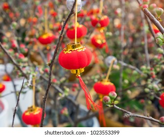 Spring festival Chinese New Year lantern decoration on a tree