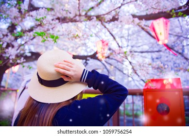 "Spring festival ""Hanami"" in Japan by tourist is watching Cherry blossom trees."