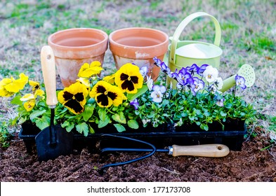 Spring fever.  Pots of violas and pansies with trowel, cultivator, and watering can on cultivated soil.