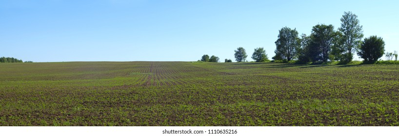 spring field agriculture organic earth panoramic landscape rural farm