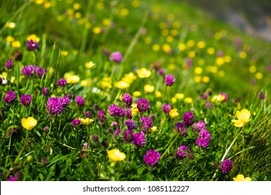 Spring field covered with flower