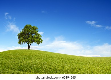 Spring field wit lone tree