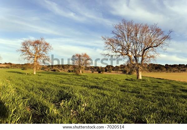 Spring fields